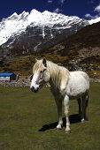 White horse in the mountains.