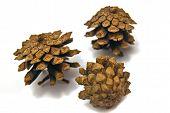Three Pinecones Close-up