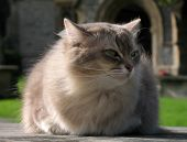 Cat in front of a church