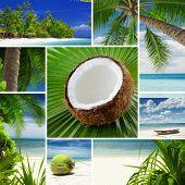 tropic mix