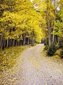 stock photo of colorado high country  - Journey through the aspens in Fall Colorado USA - JPG