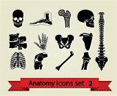 Anatomy icons set 2