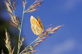 Orange Butterfly And Blue Sky
