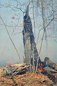 Ablaze Tree