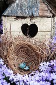 stock photo of broken heart flower  - Broken blue egg lying in a nest in front of an old rustic bird house - JPG