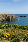 Wales Coast Path Caerfai Bay Pembrokeshire Wales UK