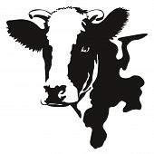illustration of a cow head