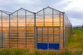 Greenhouse geothermal
