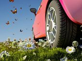 Car and butterflies on the grass.