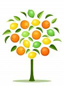 pic of tangerine-tree  - Vector abstract tree with oranges - JPG