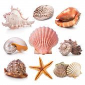 stock photo of scallop-shell  - Seashell collection isolated on the white background - JPG