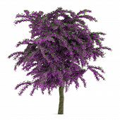 Exotic violet flower tree isolated.