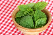 image of citronella  - A bowl of freshly picked Lemon balm - JPG