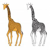 Set Of Two Giraffes. Wall Stickers