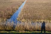 stock photo of marshlands  - Vast reed grass bed and marshland canal landscape, showing a shadow of the nature photographer.