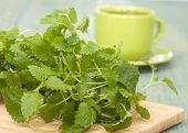 Herb Lemon Balm  For Tea And A Cup On The Table.
