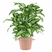 Decorative plant tree in the pot