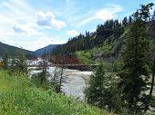 Bridge and trees scenic