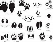 Animals Trail Set