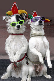 foto of funny animals  - two dogs - JPG