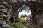 Arch And Olive Tree