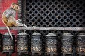 image of nepali  - Monkey with flower garland sitting on prayer wheels near Swayambhunath stupa in Kathmandu Nepal - JPG