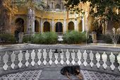 Dog sleeping in a courtyard of a park on Santa Lucia Hill, Santiago, Chile