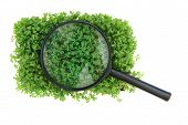Watercress And Magnify Glass