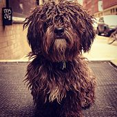 Furry Dog in New York City