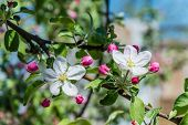 foto of garden eden  - Branches with white flowers on a background of green garden - JPG