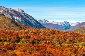 Autumn Colors Of Patagonia, Near Bariloche, Argentina