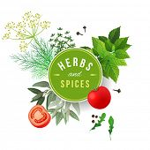 Highly detailed herbs and spices over white background