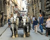 Racy Coachman Rides In A Carriage Pulled  By Horses In Florence, Italy