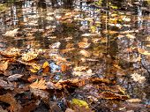 Dead fall leaves floating on water surface