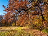 Autumn landscape with trees and shrubs in fall colors