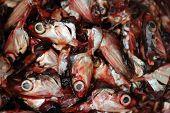 Cortar cabeças de peixe
