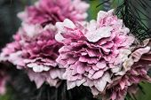 Old Pink Artificial Flowers