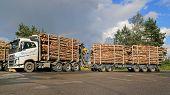 Volvo FH16 700 Birch Timber Transport