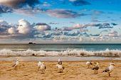 Seabirds On A Beach