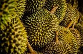 King Fruit - Durian