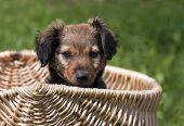 Cute Dog Puppy
