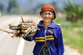 FU CHI FA, THAILAND, MARCH 4, 2011: A senior woman farmer is carrying a stick bunch in the countryside in Fu chi fa, north Thailand