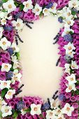 image of digitalis  - Foxglove - JPG