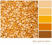 A background of dried yellow split peas, in a colour palette with complimentary colour swatches
