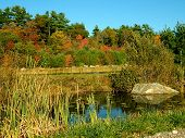 Pond surrounded by fall foliage trees