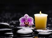 tranquil spa scene- orchid with black stones with candle