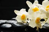 Set of branch white orchid with therapy stones