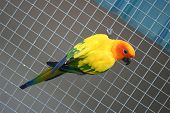 Beautiful Colorful Parrot Bird