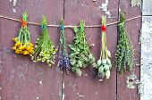 picture of hyssop  - various flowers and medical herb bunch on wooden old grunge farm barn wall