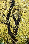 Beautiful Yellow Tree